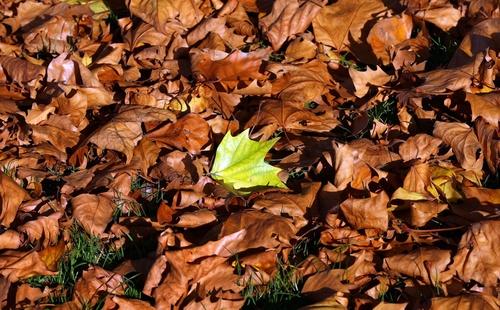 leafpetermcdiarmidgetty.jpg