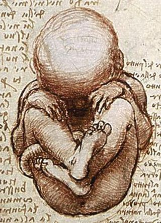Views_of_a_Foetus_in_the_Womb_detail