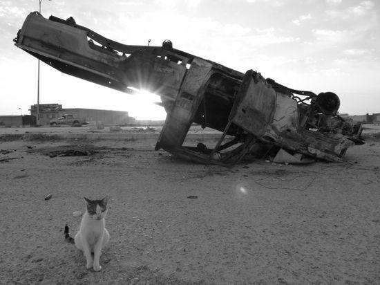Cat_libya