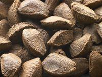 3592Brazil_nuts