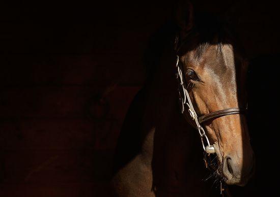 GT_Horse_Auction