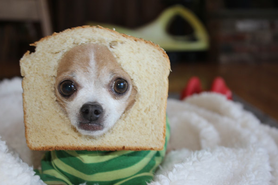 Breaded_Dog