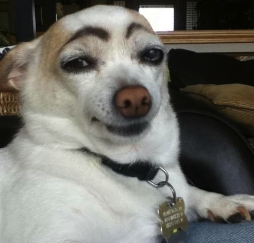 Dogeyebrows