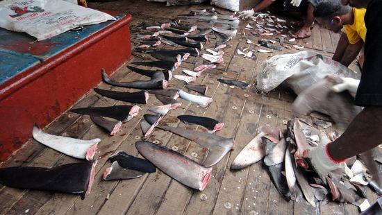 Sharkfinning
