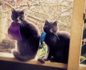 Cat-bibs