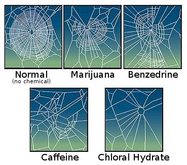 CaffeinatedSpider