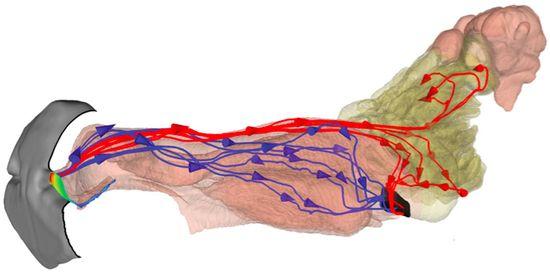 Nasal-flow
