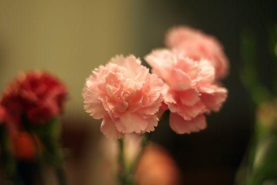 Flowerstable