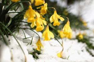 Spring Snowstorm Hits Northern Scotland