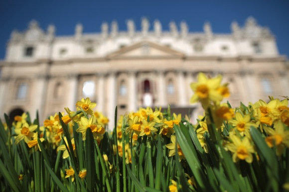 Daffodils for Francis