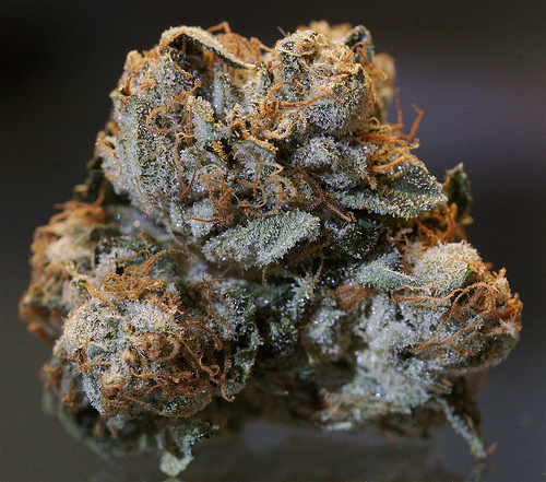 Colorado Kush: Marijuana Prices In Colorado Are Sky High