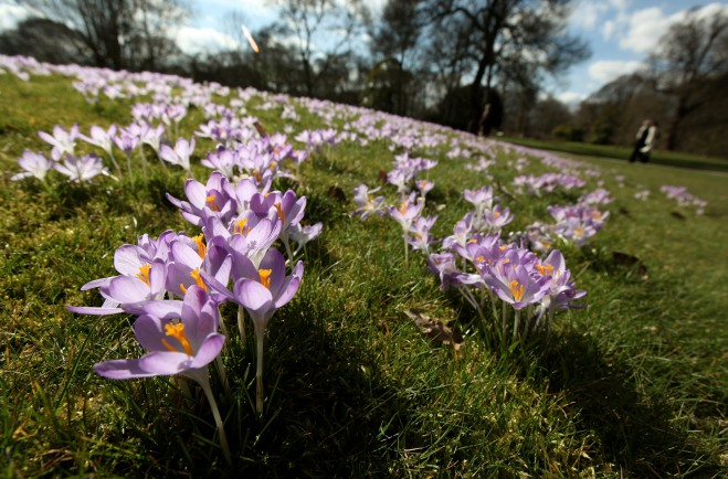 The First Signs Of Spring Are Seen At Kew Gardens