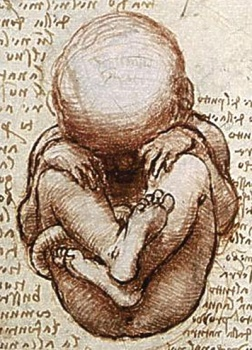 foetus-inset