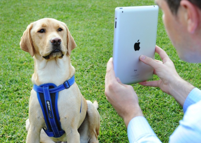 Hanrob Pet Hotels Launch 'Petskype'