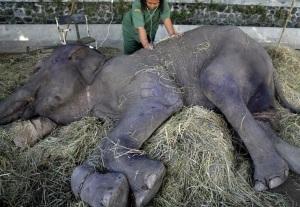 A Surabaya Zoo health worker checks the