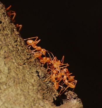 dish_ants
