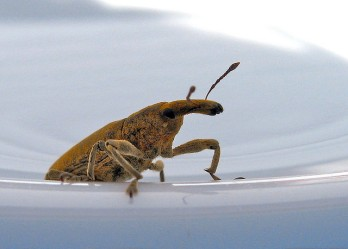 dish_insect