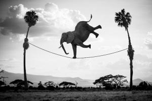 elephant-tightrope