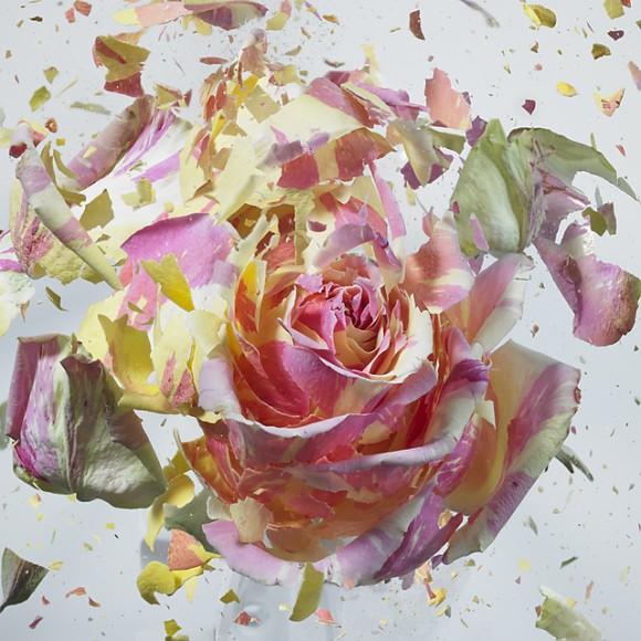 explodingflowers01