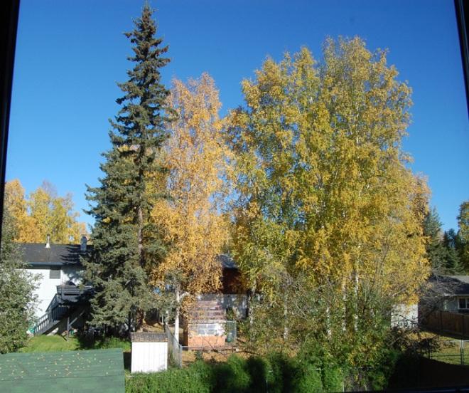 Fairbanks-Alaska-231pm