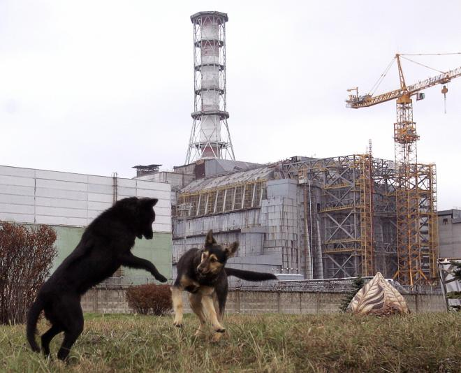 Stray dogs play in front of the Chernoby