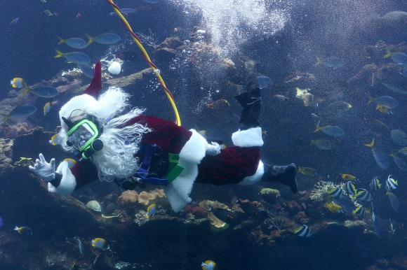 Scuba Santa Claus Explores Massive Coral Reef Tank In San Francisco