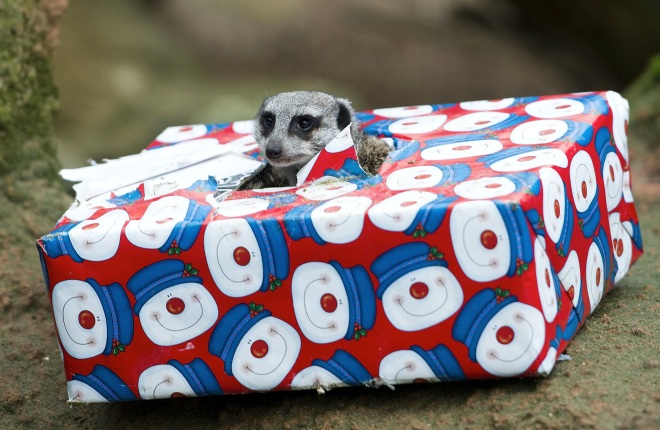 Animals At Hanover Zoo Receive Christmas Gifts