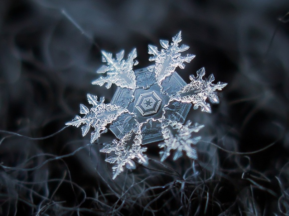 dish_snowflake