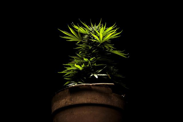 dish_weed