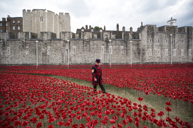 Volunteers Continue To Plant Ceramic Poppies At Tower Of London