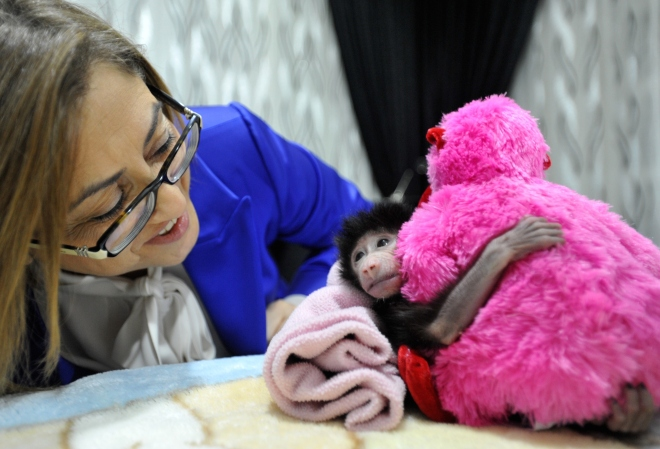 Mayor Sahin visits  the baboon rejected by its biological mother