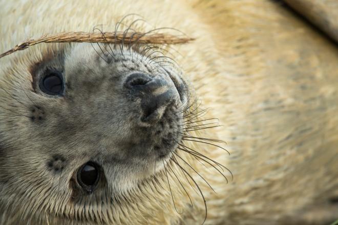 Seal Pup Season Continues At Donna Nook Reserve
