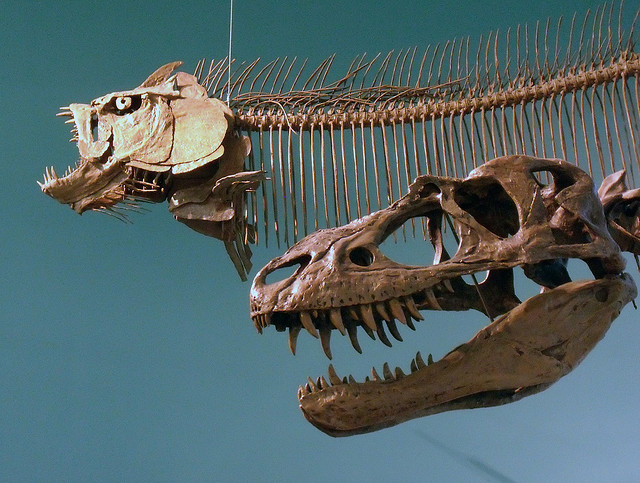 dish_gorgosaurus