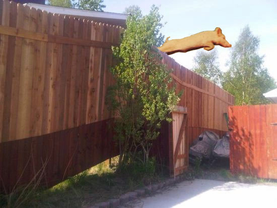 palin-fence_swimming-pig